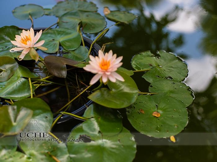 01_mayfield_lotus